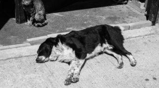 E' possibile accudire cani e gatti randagi nelle parti comuni del condominio?