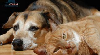 Animali in condominio, quali sono le regole da rispettare